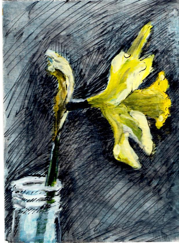 Daffodil from Teri